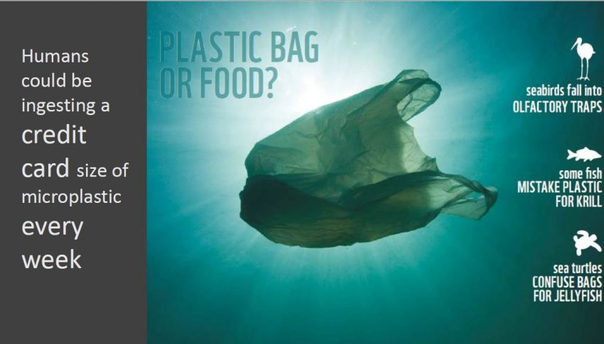 Travel Without Plastic webinar draws a crowd